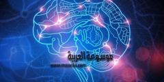 علم النفس مفهوم الذاكرة و الأنشطة العقلية والمعرفية