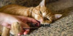 فن التعامل مع القطط…فكرة عن تربية القطط