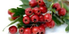 معلومات عن نبات الزعرور .. تعرف علي كيفية زراعة نبات الزعرور وفوائده