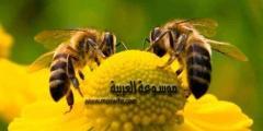 حقائق عن النحل .. أبحاث وحقائق ومعلومات غريبة جداً عن النحل وأهم فوائده