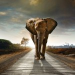 The Elephant in the Room Idiomation