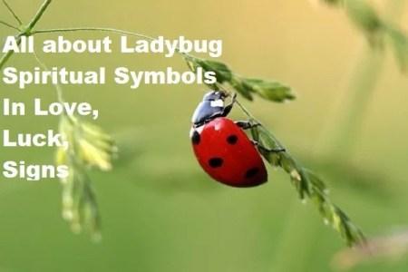 All about Ladybug Spiritual Symbols