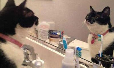 Funny Picture of Cat Looking in Mirror