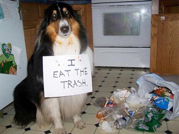 dog-eats-trash-mother-humor