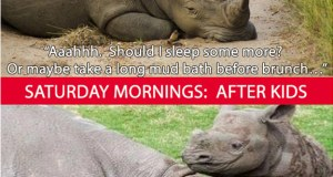 Funny pictures of rhinos