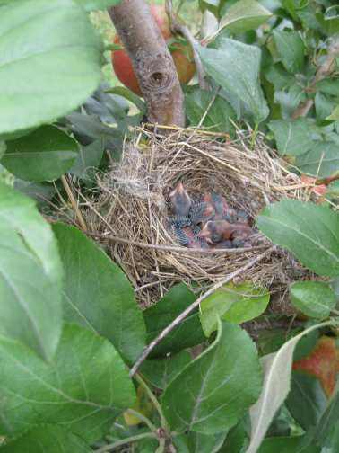 the nest of motherhood
