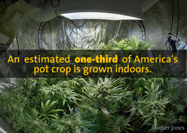 Indoor crop
