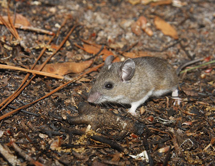 How Nervous Should I Be About Hantavirus? – Mother Jones