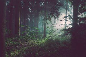 Forging A New Path
