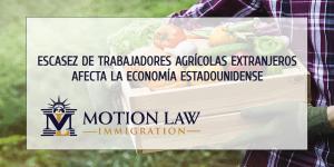 Estados Unidos necesita extranjeros para tapar huecos de trabajadores agrícolas