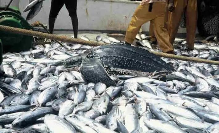 Is fish Farming Profitable