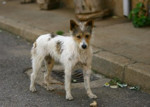 Dogs roam the streets in the quiet Spanish villages