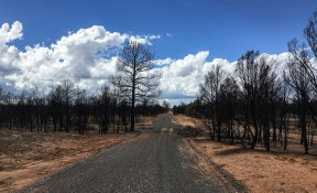 Riding into Grand Canyon NP on a gravel road passing through burnt forests