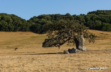 Tree and rock, an old love