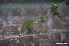 Raindrops falling down on a flooded floor around a branch from a plant