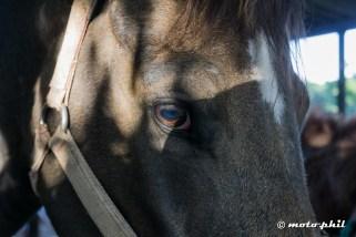 Close up of a horse's head
