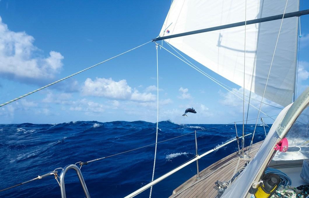 Pasifik sularında seyir