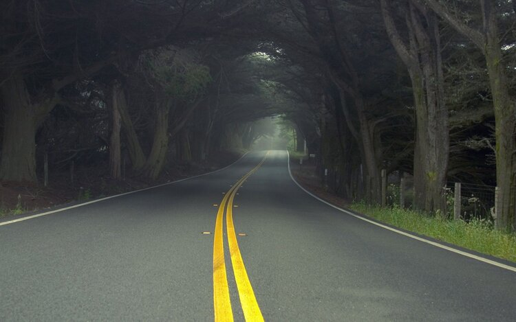 motorcyclist riding forest road through trees