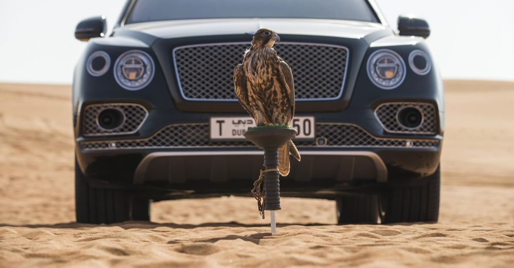 Bentley Falcony