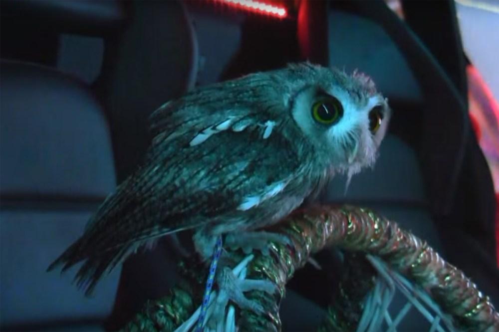 Bosozoku Murcielago Owl