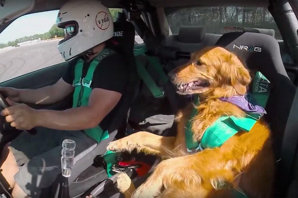 Jett the Drift Dog