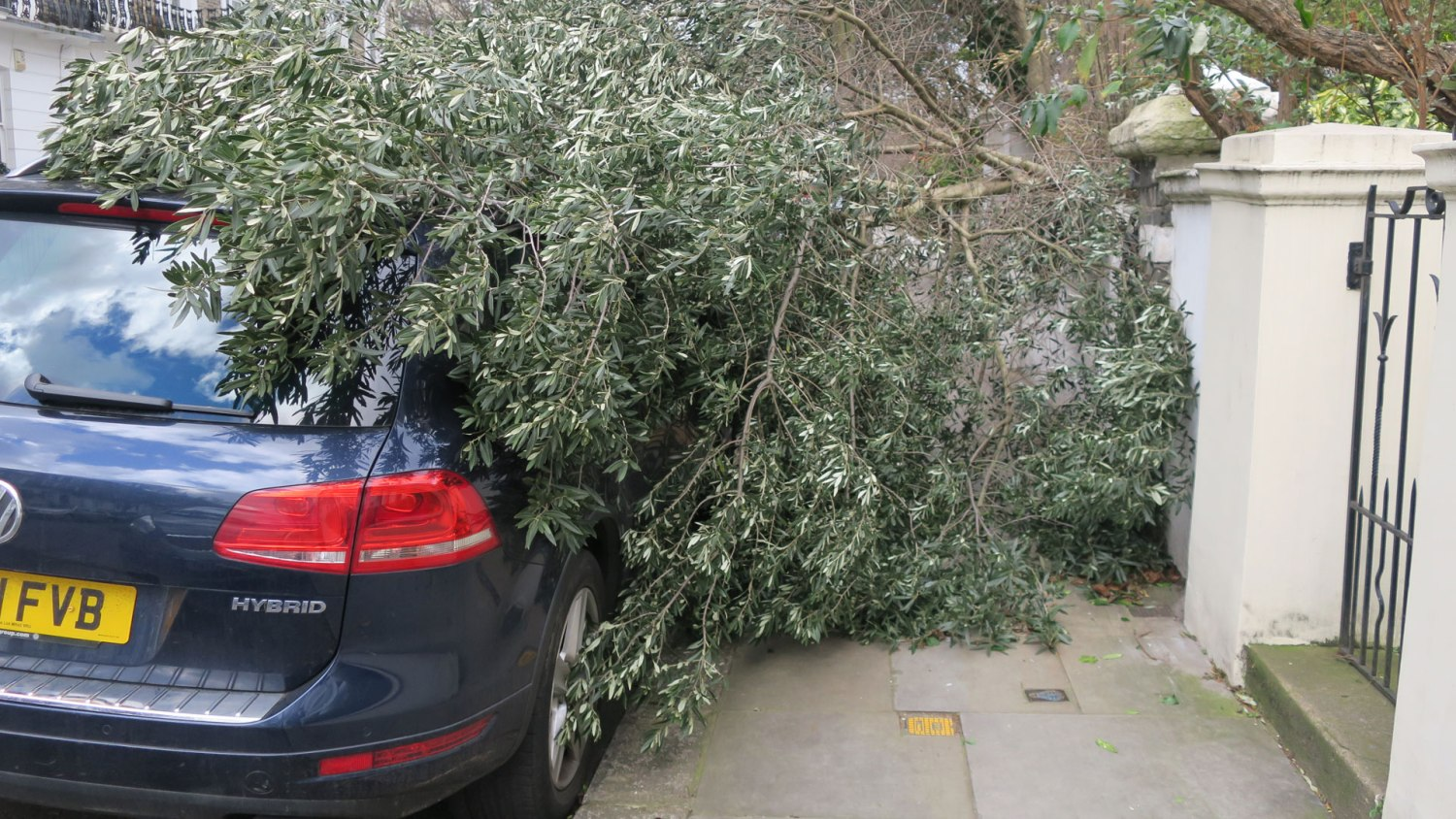VW damaged by tree after strong winds