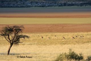 Botswana0042