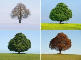 quattro-stagioni