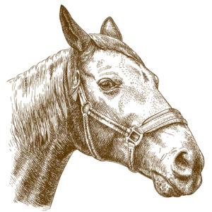 Fig. H. Cheval. Musée du cheval.