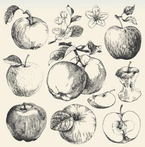 Fig. A. Pommes. Musée Y'a d'la pomme, Montauban.