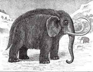 Branler le mammouth