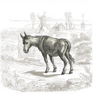 Être comme l'âne de Buridan