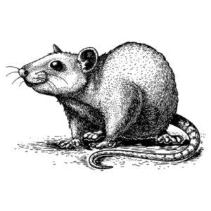 Faire queue de rat