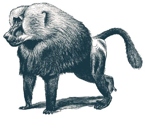 Baiser le babouin [beze lə babwɛ̃]