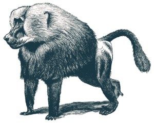 Baiser le babouin