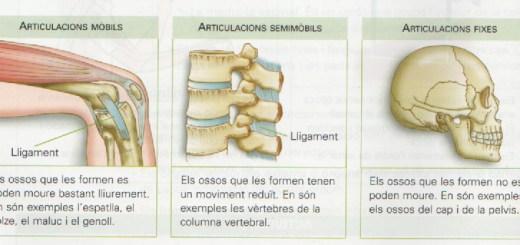 Ossos, músculs, articulacions