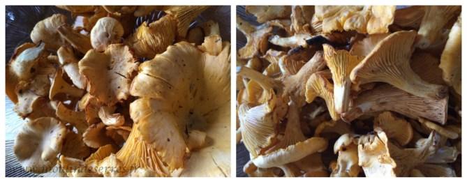 champignons_moulin_de_serres