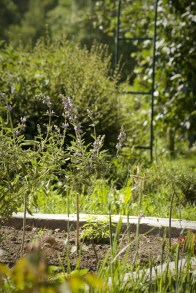 Le jardin des aromatiques