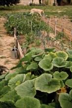Une vue du jardin-potager