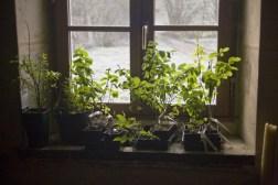 Les plants sont au balcon !