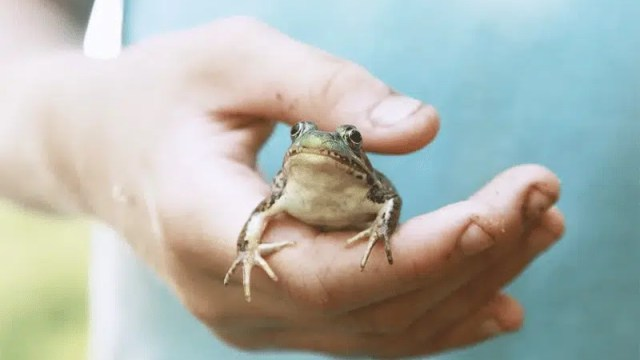 up close view of a hand holding a small frog