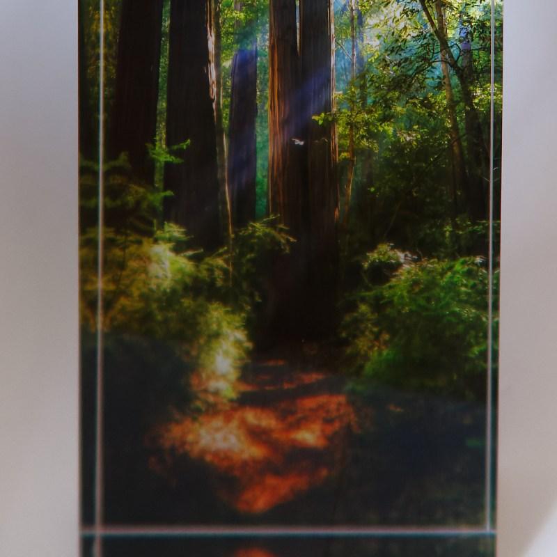 Big Basin Redwood Trail - Brian Salisbury