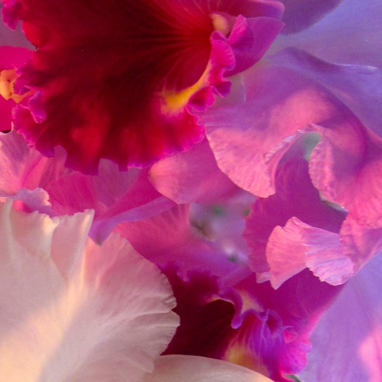 Orchids 1 - Lee Taiz