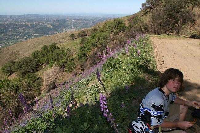 Stopping to smell the lupins