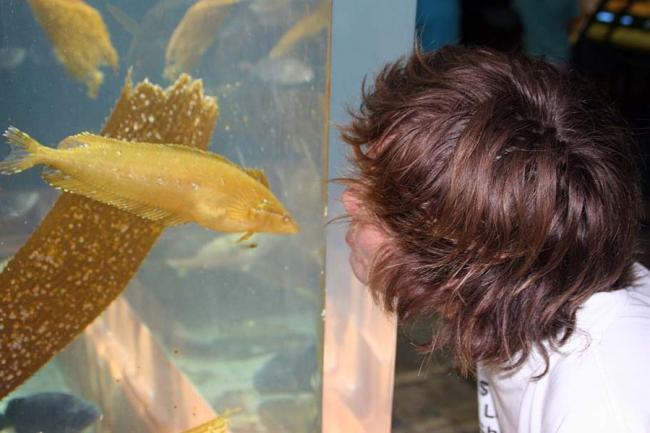 Fish Kisser