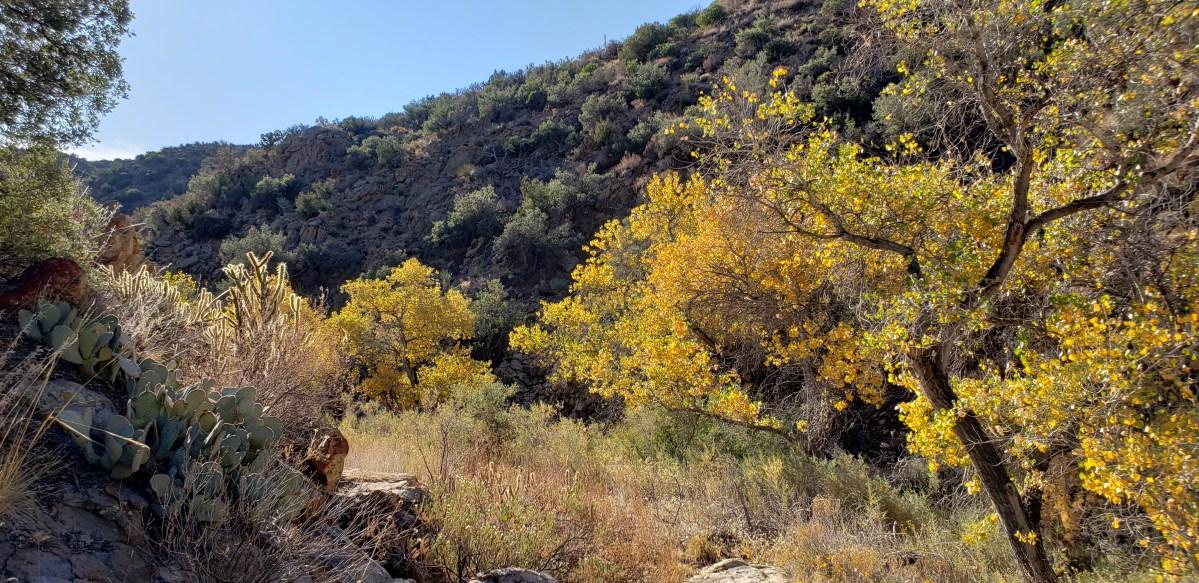 CRHT – Beauty Mountain Wilderness