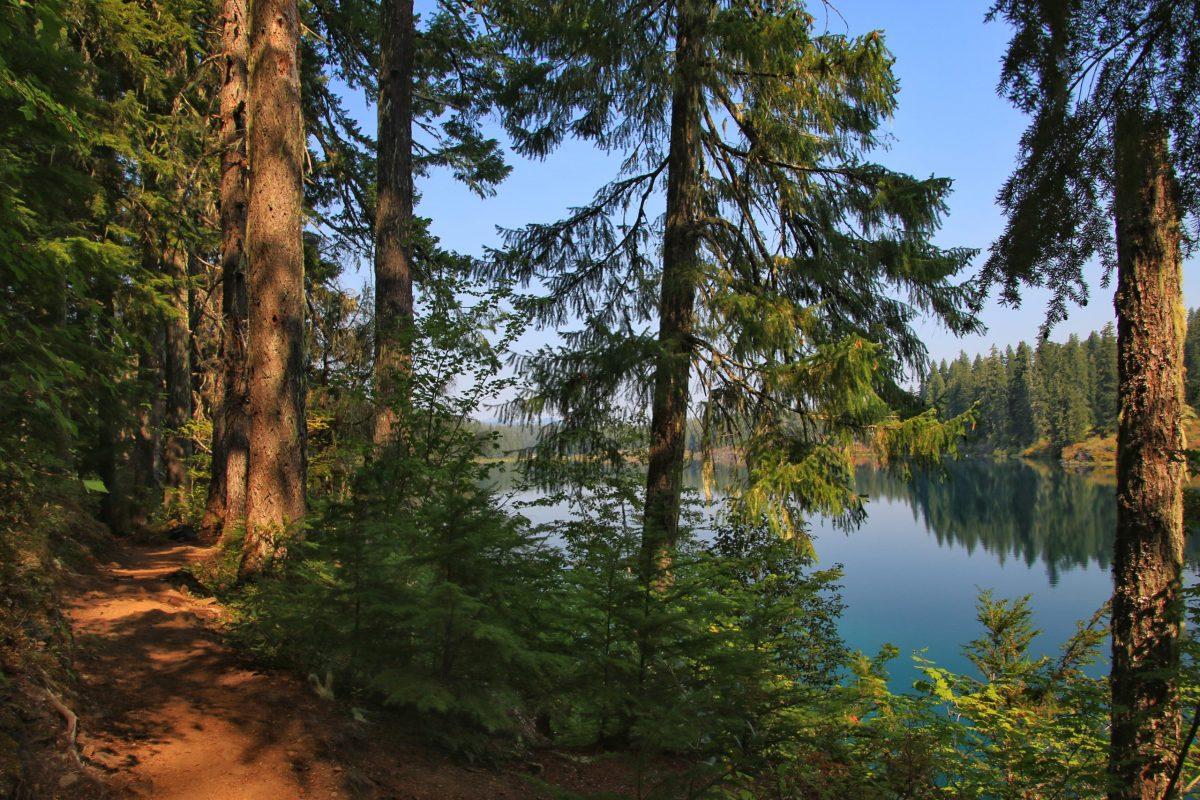 McKenzie River Trail Video