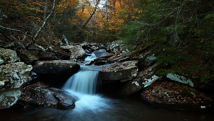 Photo courtesy Wikimedia Commons. By ForestWander.