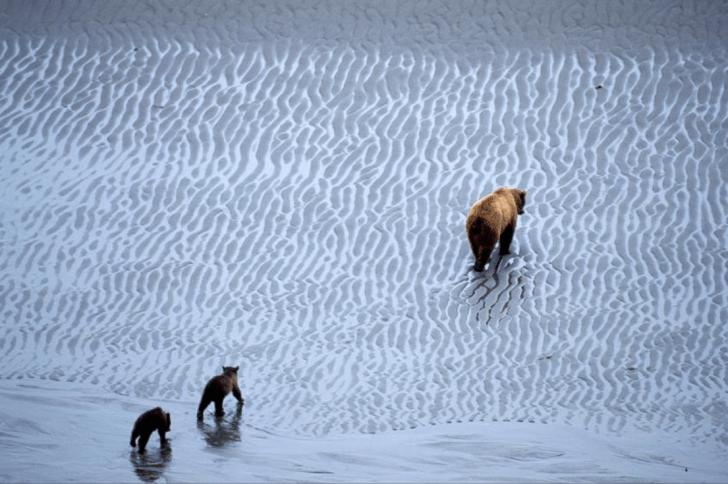 Photo Credit: Ian McAllister/Pacific Wild