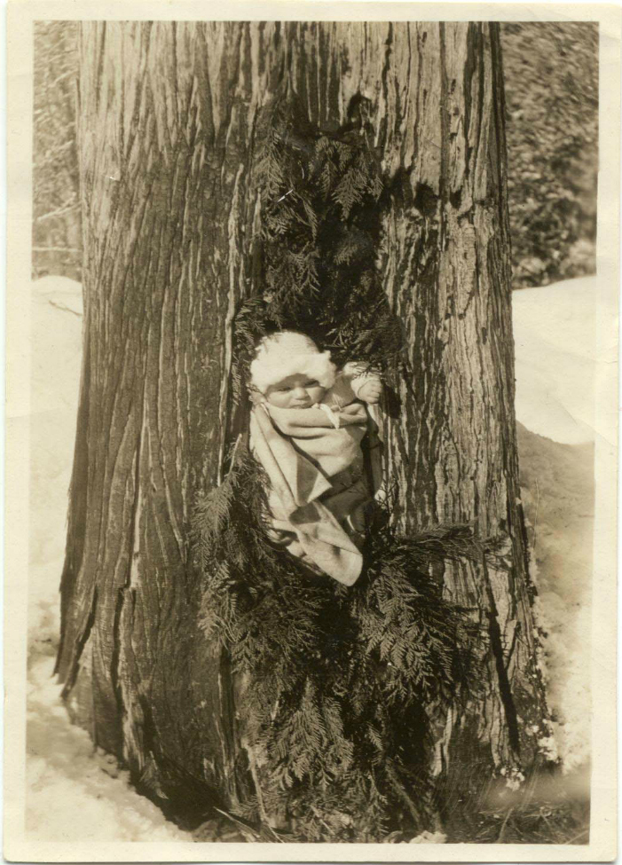 Doreen Tapley as a baby, wrapped in a blanket and stuffed in a hollow tree. Boughs were placed above and below her for a festive look. Courtesy Whistler Museum.